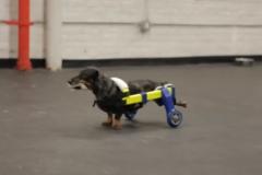 mark-two-fahrgestell-für-hund
